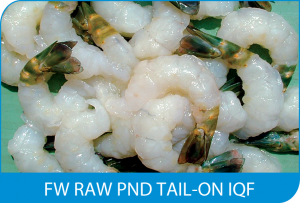 FW RAW PND TAIL-ON IQF