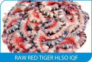 RAW RED TIGER HLSO IQF
